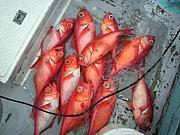 海釣り・関東休日漁師会