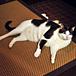 ネコロジー。野良猫休憩所。