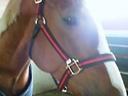 折手牧場愛馬会