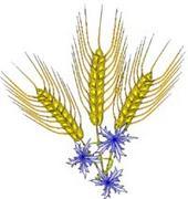 小麦&グルテンLovers