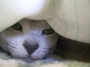 猫|ョω・o)スキDЁSЦ☆