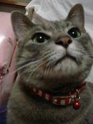 やっぱり猫がすき =^0^=