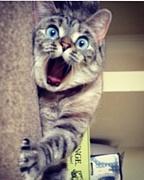 こんな猫さん大集合♡