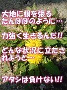 花音のポエム☆彡★彡