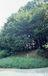 雑木林文化