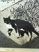 ねこ 猫 黒猫 大好き