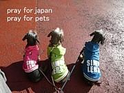 東日本大震災ペット救援情報