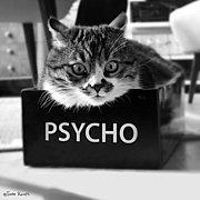 心理学を日常生活で効果的に使う