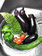 無農薬の菜園!有機・自然農法