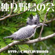 独り野鳥の会