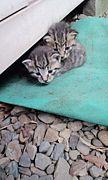 捨て猫・子猫の育て方相談所
