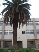 大阪市立 菫中学校