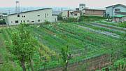 藤井ファーム〜西宮で自然農法〜