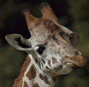 石岳動植物園を応援するかい