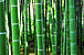 竹に、なりたい。