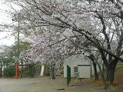 中国分小学校