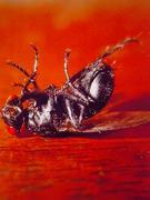 虫・小動物の死体