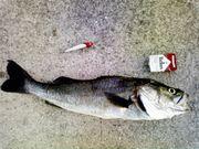 淡路島の海釣り