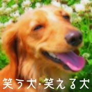 笑う犬・笑える犬