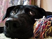 黒犬☆Black Dog