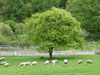 八ヶ岳・清里高原の美しい四季