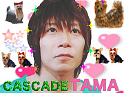 再結成!!!TAMA☆☆(CASCADE)