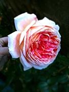 被災地に千のお花の画像贈ろう