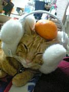 猫バカーズ☆親バカーズ