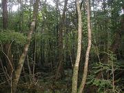 自由の楽園、眠りの森