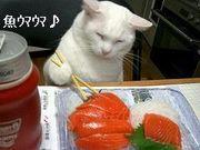 お魚好きですか?