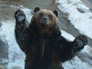 苗字が熊って字が入っている人