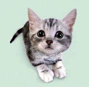お気に入りの猫画像・猫話