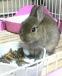 ウサギたちの情報交換所!