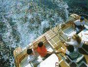 小型船舶で海へクルージング!
