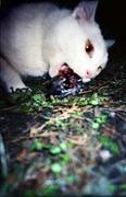 地下組織白猫同盟