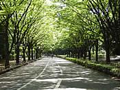 駒沢公園 走ろう会