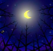 眠れぬ夜の物語