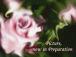 Your Bridal☆『結婚式の絵』