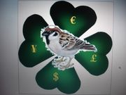 White Headed Sparrows Ltd.