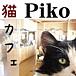 猫カフェ【Piko】
