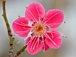 ♡pretty   flower徒然日記♡