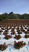 野菜王国川上村でアルバイト