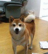 dog!!!!dog!!!!!dog!!!!!!!!!!★