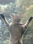 猫が網戸に飛びつく