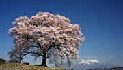2012入学☆日本赤十字豊田看護大