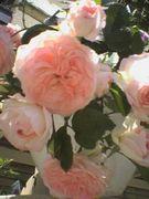 薔薇グッズ好き