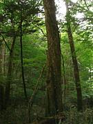 森のトークライブ