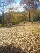 森のようちえん茨城
