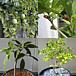 熱帯果樹を育てたい!