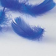 美しき翼mixi出張所